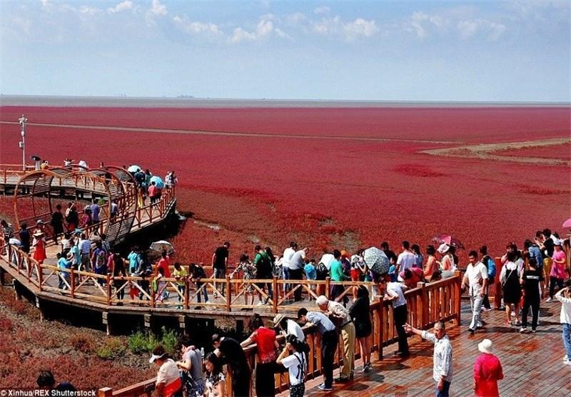 تصاویر زیبا از بزرگ ترین تالاب جهان در چین