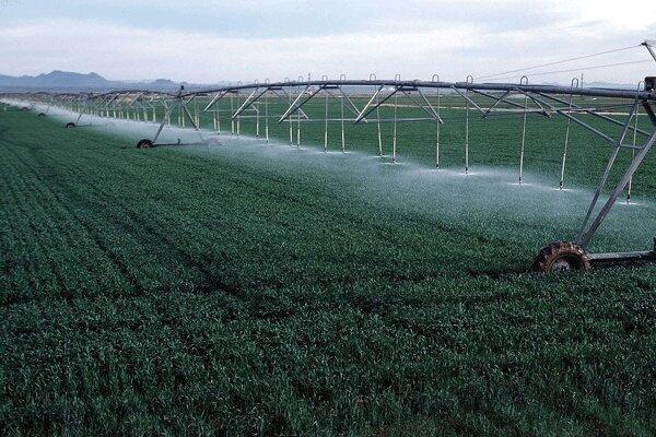 افزایش مقاومت محصولات کشاورزی توسط محققان شرکت های دانش بنیان