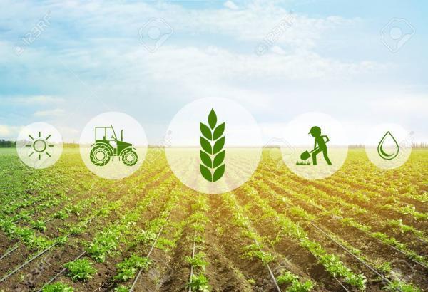 با 5 کاربرد فناوری فتونیک در صنعت کشاورزی و غذا آشنا شوید خبرنگاران