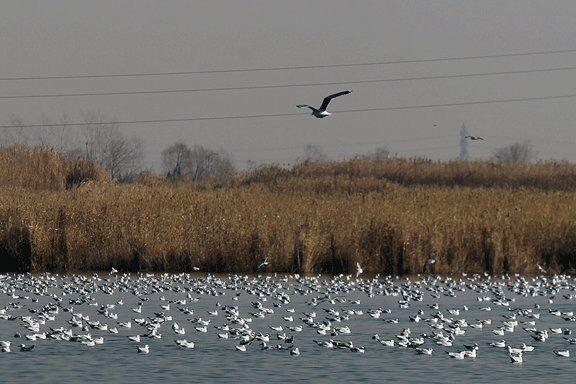 خبرنگاران در عشق آباد به نظاره پرندگان عاشق بنشینید