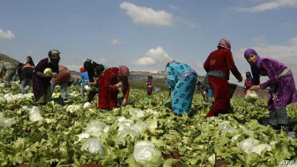 کشاورزان لبنانی خواهان لغو ممنوعیت واردات محصولات کشاورزی به عربستان شدند